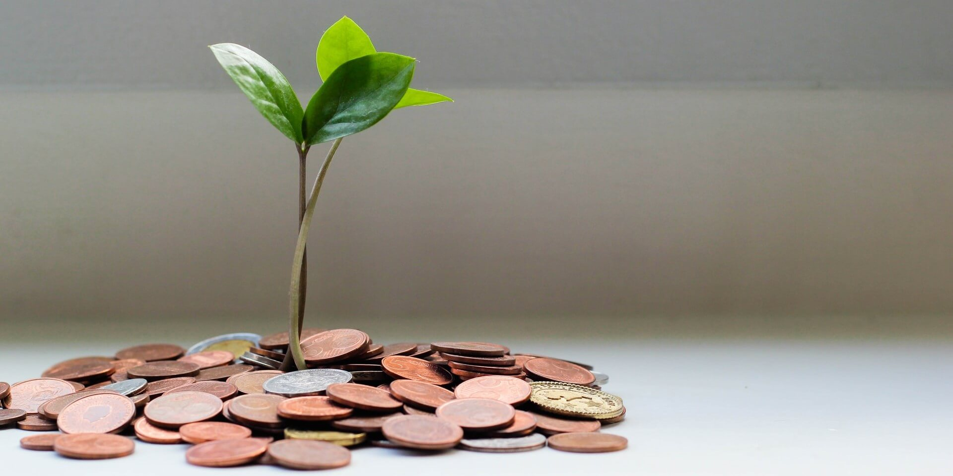 green plant growing from a pile of coins